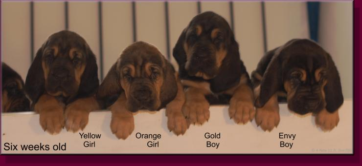 Yellow Orange Girls, Gold and Envy Boys at almost 6 weeks